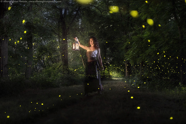 Looking for the fireflies