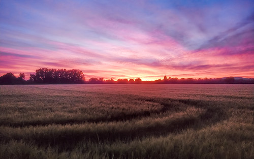 sunset nature landscape skyfire wheatfield westsussex tractortracks curve dusk evening england chichester colourful colorful beautifulscene settingsun red purple endoftheday polychromatic mobilephotography shotononeplus