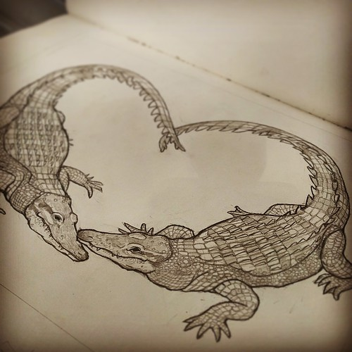 Alligator Sketch 2 | by sarah draws things