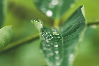 Raindrops | by ZoneFlow