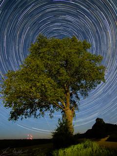 Leaves Of Stars (O15) [Explored 28/06/2017] | by Darblanc ( http://darblanc.com )