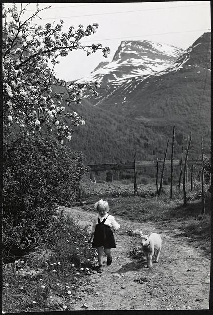G-240-3. Sommermotiv : liten jente med lam