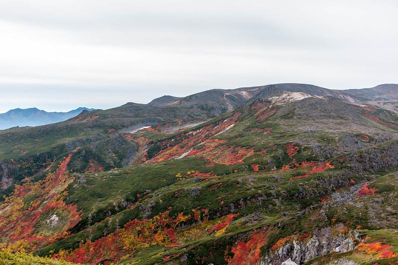 大雪山 黒岳 紅葉