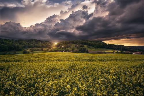 neuburg switzerland winterthur drama lightdrama magic green hills hilly trees woods forest fields clouds rainy thunderstorm glow evening sunset skyburning zürich ch