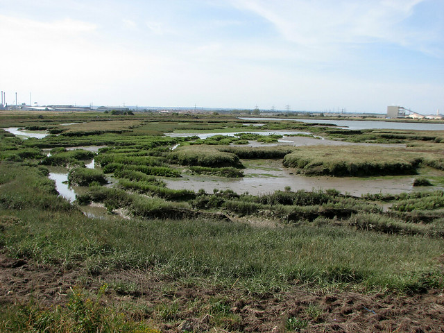 Marshes near Elmley