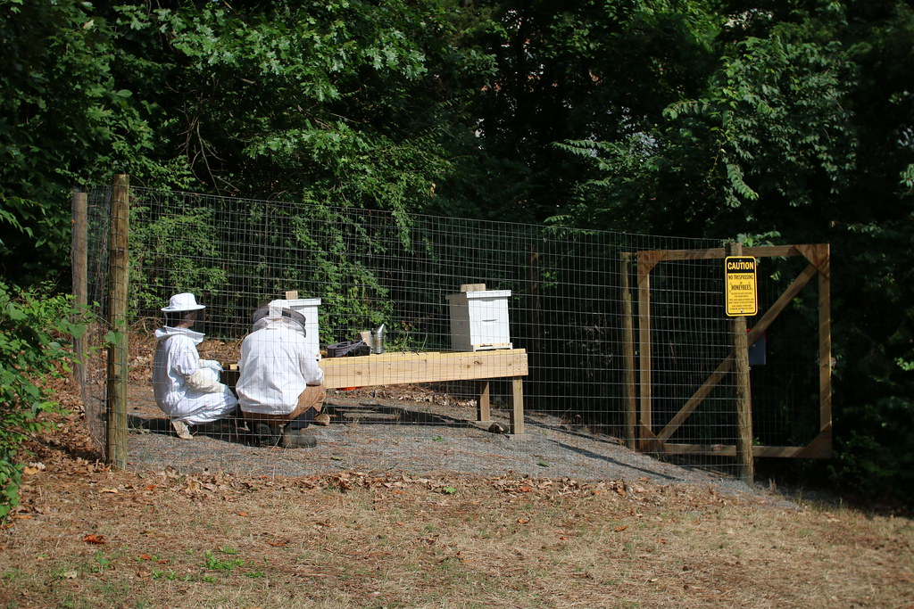 UR Beekeeper Joe Essid and Biology Lab Manager Kirsten Berben inspect the hives.