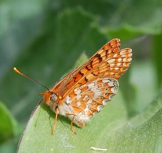 mariposa   by Finca la Casilla