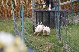 RAISING FUN ON THE FARM! | by Farmer Charleys Kackleberry Farm