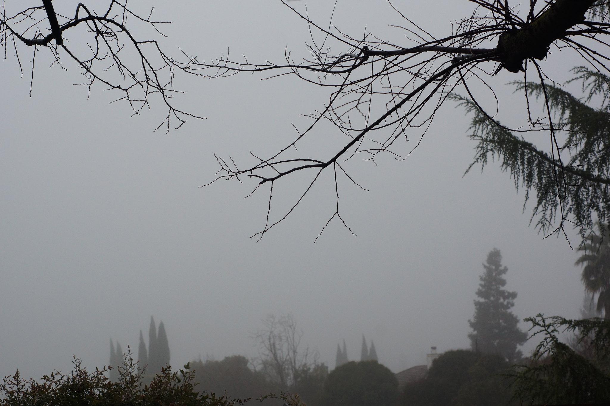 2017-01-15 No colorful Sunrise, just Fog [#3]