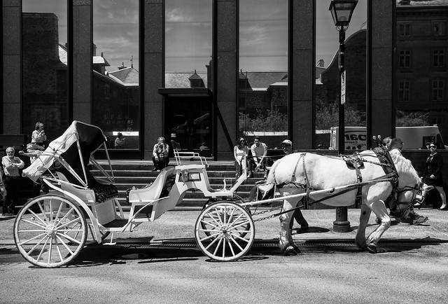 White horse / Montreal