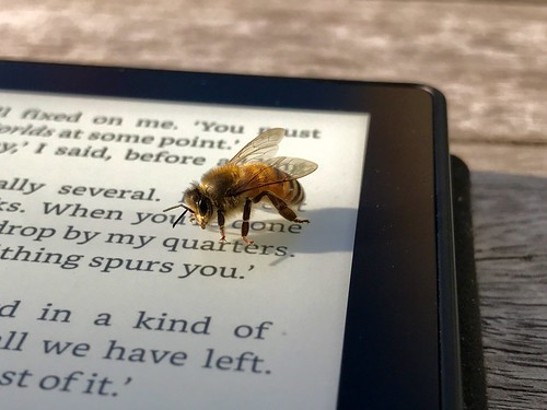 Bee and Kindle | by Paris B-A