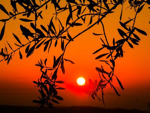 sun sunset set kos greece nature sky orange leaves tree zoom olympus horizon