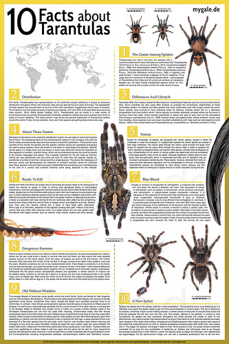 10 Facts About Tarantulas   by mygale.de