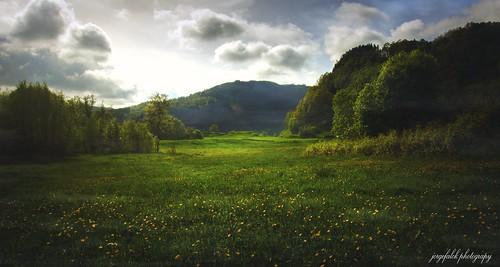 norwegianlandscapes norway sunset trees mountain åsane bergen sundown summer sunlight jorgefalck landscapes landscape jorgefalckphotography