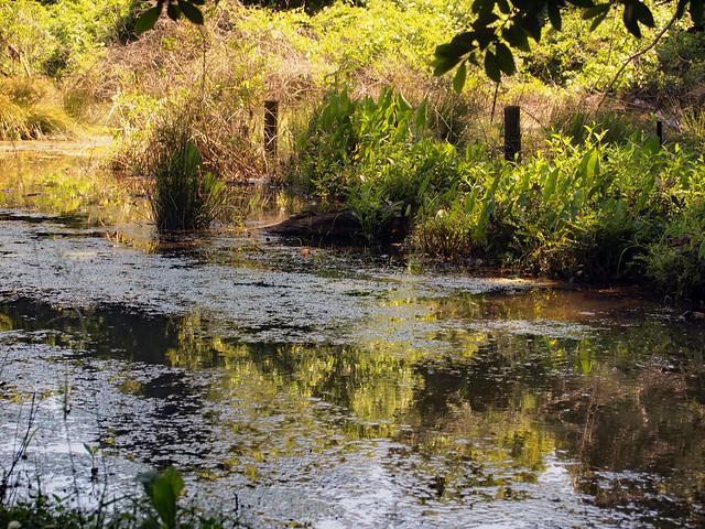 Stillwaters @Postal Pond