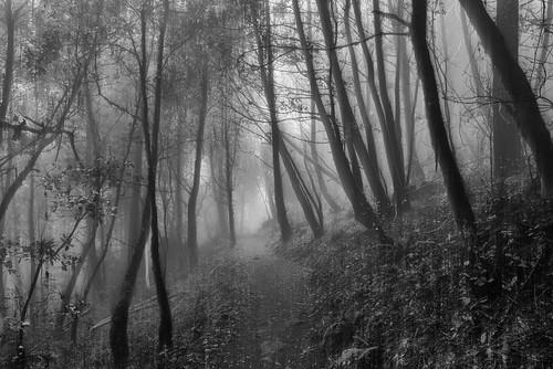 california sanmateo purisimacreek blackandwhite fog