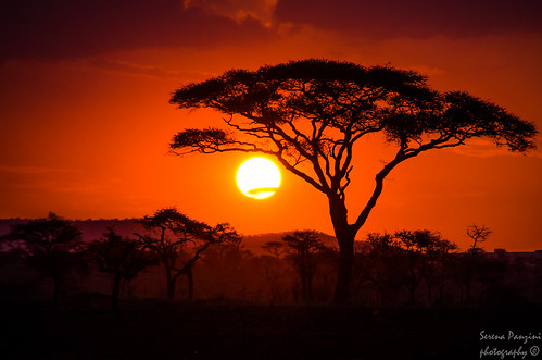 Savana Sunset