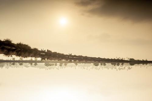 golden sunrise godsown upsidedown reflection reverse kerala india cochin kochi kadamakkudy canon lake water sky