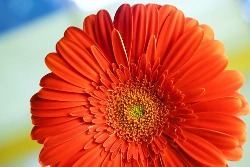 Daisy macro | by Photosintune