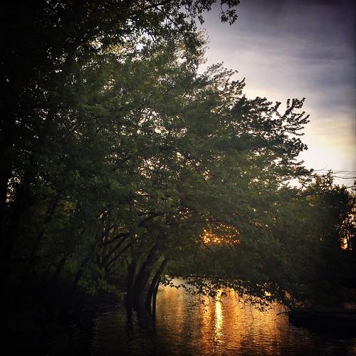 mobilephotography iphonography trees sunset nature jollyrainbow2x robustafilm janelens hipstamatic oxbow