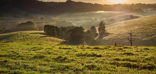mist farm hills sunrise trees forest sun rays