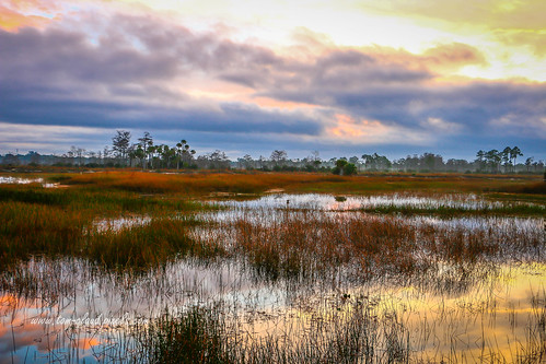 sun sunrise marsh water reflect reflection sky weather clouds cloudy grass grasses trees mothernature outdoors outside jupiter florida usa landscape nature pine glades natural area naturalarea