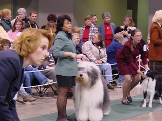 Dog Show at the event center - Fairgrounds in Hamburg, NY