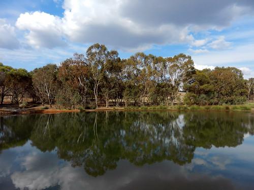 western australia bannister landscape tree lake eucalyptus forest bush sky cloud dana iwachow nikon s9200