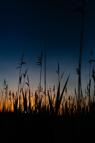 sunset mullicariver wadingriver wadingriverwma saltmarsh newjersey newgretna nj 2017 phragmitesaustralis