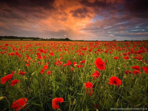 clouds landscape nature poppies sunset oxfordshire poppy