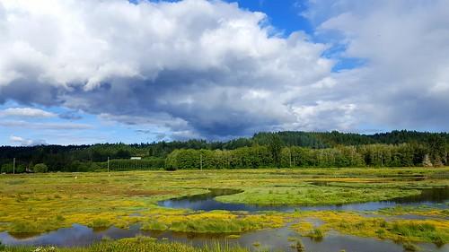 thelerwetlands belfair hightide hoodcanal cloudsstormssunsetssunrises galaxys6 wetland