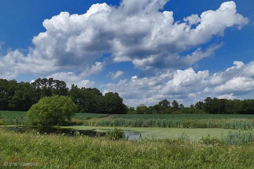 dinwiddiecounty virginia va usa landscape farm pond