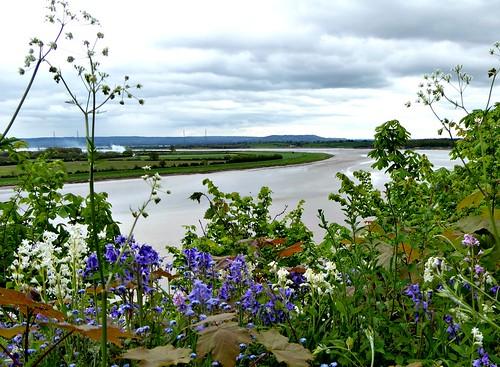 severn esuary spring flowers sky water river gloucestershire view panasonic dmc tz60 bluebells wildflowers