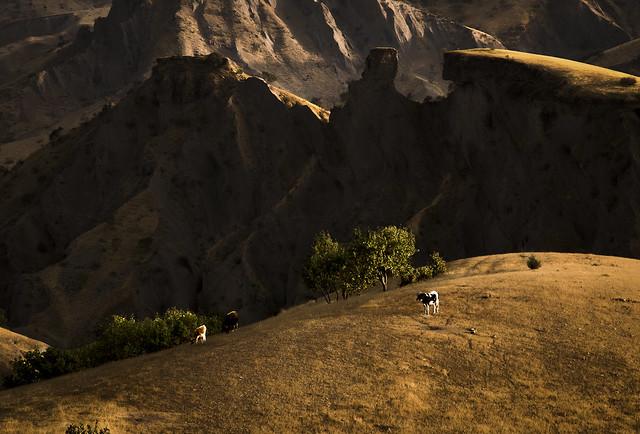 wild at mountain