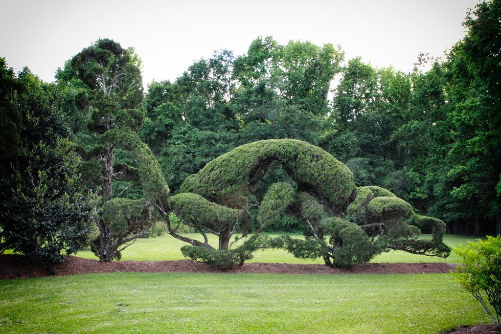 Pearl Fryar S Topiary Garden Pearl Fryar Was Born In Clint Flickr