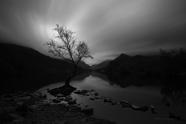 llyn padarn lake tree