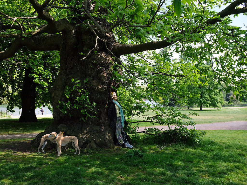 A woman and two dogs rest stand in the shade of a tree