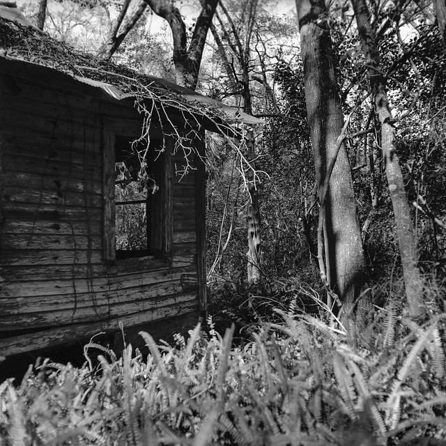 Woodland Windows