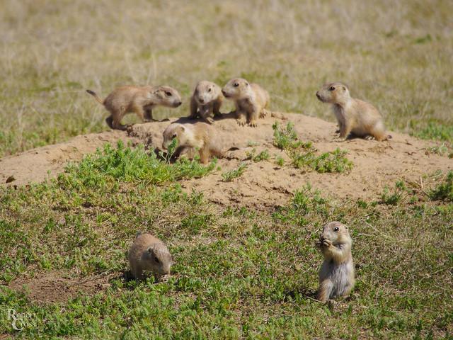 Little Mound on the Prairie