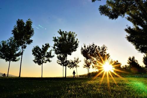 sun sunset man atardecer rayoflight arboles marmara deniz sea oceano mar izmit turkquia turkey park