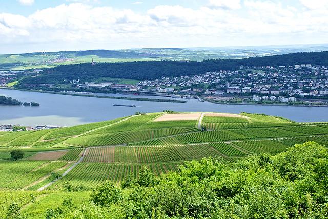 Le Rhin à Rüdesheim