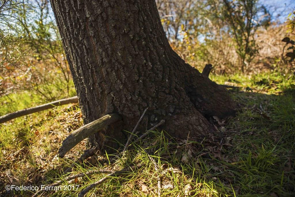 Caldara di Manziana albero e pali