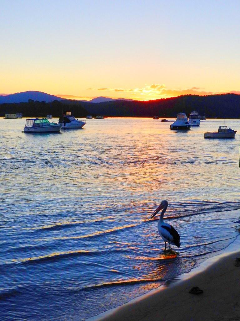 Pelican sunset I