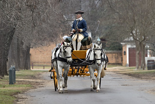 Colonial Williamsburg Virginia - carriage horses | by watts_photos