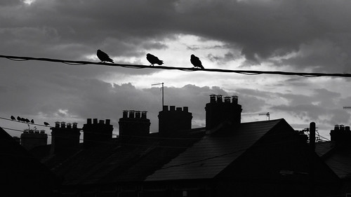 birds silhouette rooftops chimney wires portal cork ireland monochrome dorameulman sunrise firstlight juxaposition