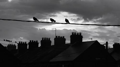 birds silhouette rooftops chimney wires portal cork ireland monochrome dorameulman sunrise firstlight juxaposition