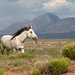 wild horse Indian reservation South East Utah by adambralston74