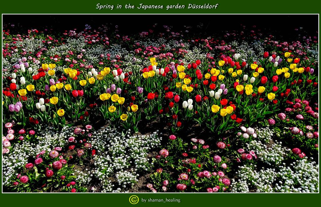 Frühling Im Japanischen Garten Düsseldorfspring In The Ja Flickr