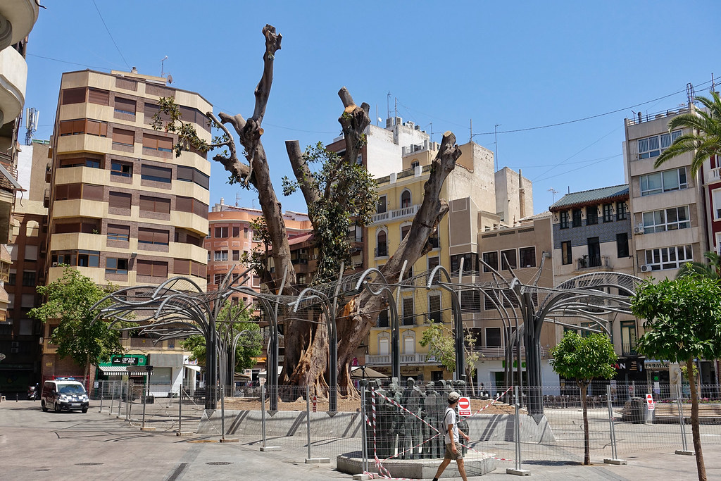 Pruned Ficus Tree If You Know Murcia City You May Not Rec Flickr