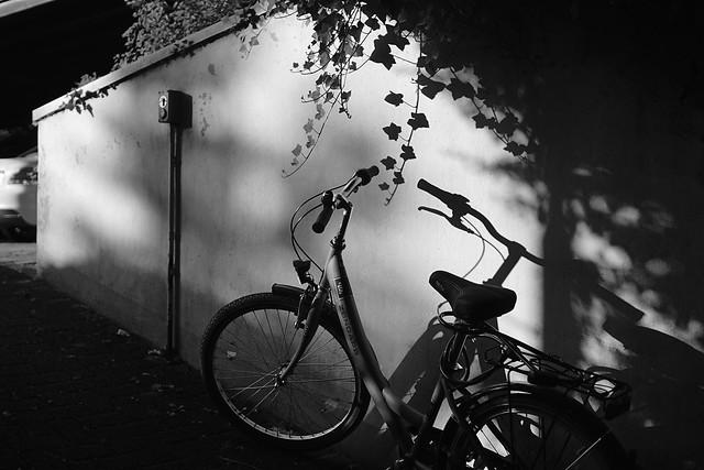 familiar light and shadow
